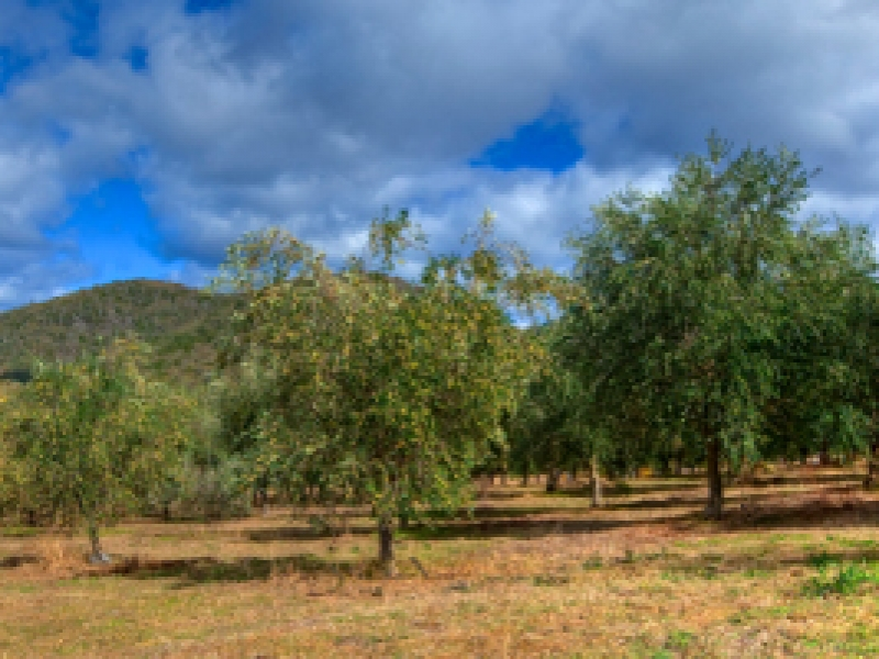 Cudgegong Olive Oil Mudgee