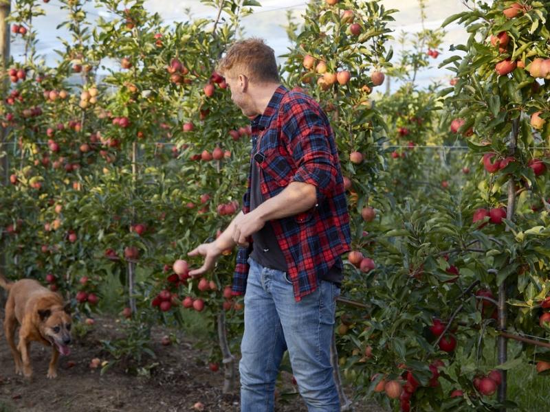 Logan Brae Orchard Blackheath